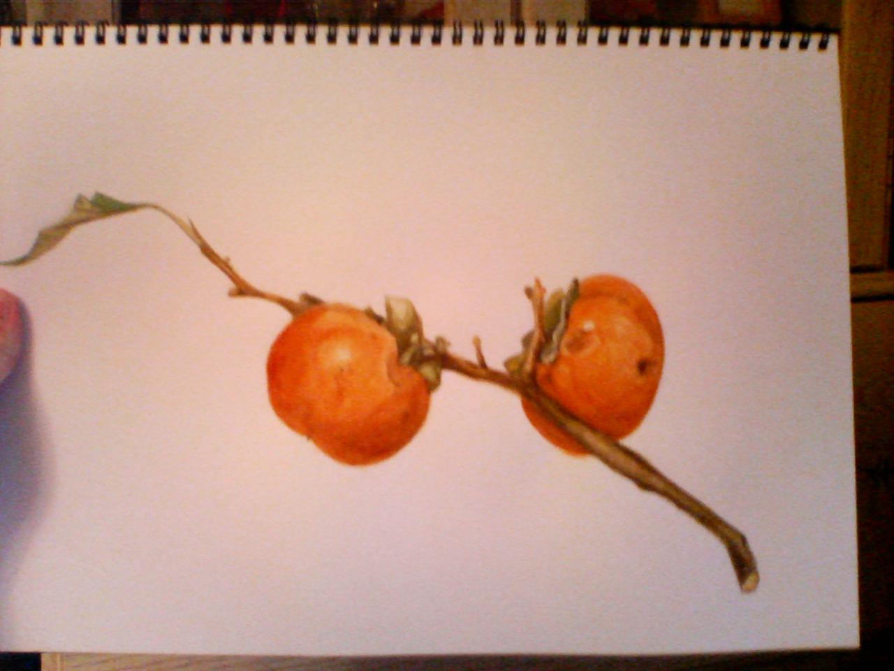 水彩「柿」手順