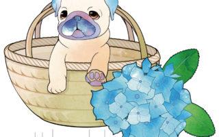 動物-バッグにパグ02アジサイ-