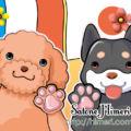 動物-和犬洋犬-
